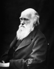 Julia_Margaret_Cameron_oenf_29_Charles Darwin