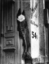 El pez grande se come a los chicos. 1932