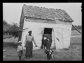 John Vachon. John Barnes with cow he bought through a FSA Farm Security Administration loan Near Ridge Saint Marys County Maryland