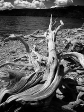 ansel adams log