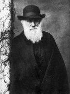 Julia Margaret Cameron Darwin