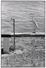 USA. Florida Keys. 1968.Elliott Erwitt