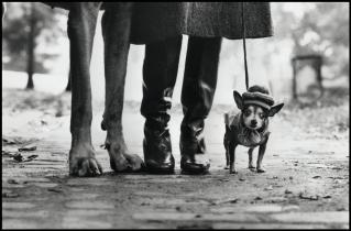 USA. New York. 1974.Felix, Gladys and Rover.Elliott Erwitt