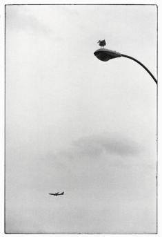USA. New York City. 1975.Elliott Erwitt