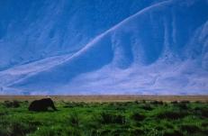 Ernst_Haas_elephant