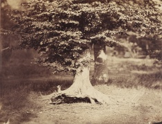 Gustave_Le_Gray_40
