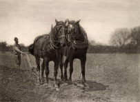 Peter_Henry_Emerson_21