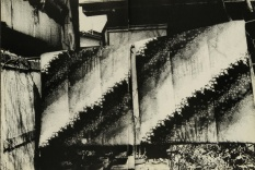 Daido Moriyama, light and shadow_70
