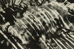 Daido Moriyama, light and shadow_72