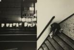 Daido Moriyama, Shinjuku_233