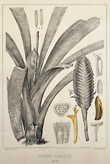 herbier-antoine