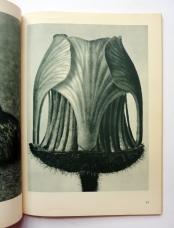 Urformen der Kunst karl blossfeldt 17