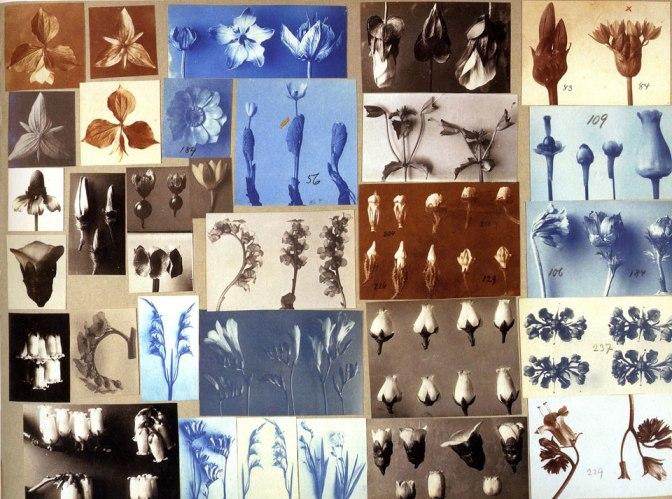 El ecosistema visual de Karl Blossfeldt