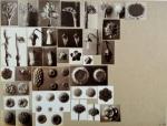working_collage_karl_blossfeldt_2