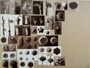 working_collage_karl_blossfeldt_2