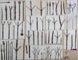 working_collage_karl_blossfeldt_3