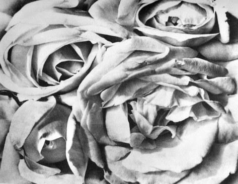Tina Modotti. Rosas. (1924)