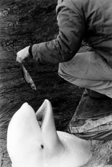 Warri_Winogrand_New York, 1963_5_zoo_18