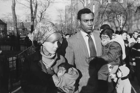 Warri_Winogrand_New York, 1963_zoo_6