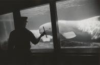 New York Aquarium, Coney Island, New York