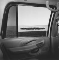 Friedlander_America-by-Car-8-562x570
