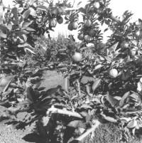 Friedlander_Apples-and-Olives-10-567x570