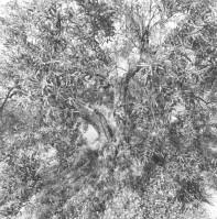 Friedlander_Apples-and-Olives-61-562x570