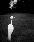 Bill_Brandt_OscarEnFotos_5