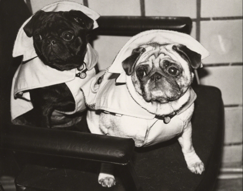 andy_warhol_dogs_in_raincoats_1985