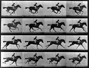 """Retícula con imágenes congeladas del movimiento del pura sangre """"Occident"""", propiedad de Leland Stanford"""