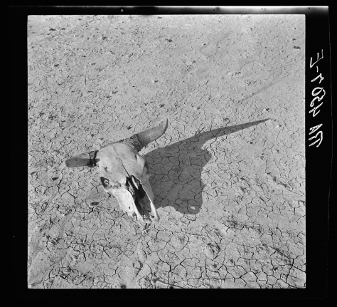 arthur_rothstein_The bleached skull of a steer on the dry sun-baked earth of the South Dakota Badlands_may1936