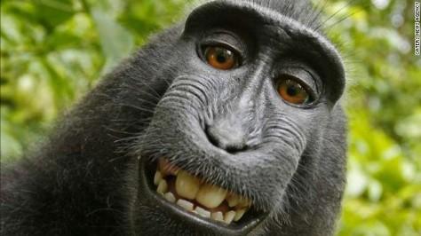 selfie_monkey