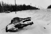 USA. Alaska. 1959.