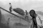 CHINA. Province of Gansu. 1957. Wheat harvest.