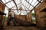 A migrant laborer carries a branch for a thatched roof during work building a home on a piece of fallow state-owned land on the outskirts of Havana June 25, 2012. Thousands of migrant laborers from the east of the country arrive every year to Havana and the outskirts, build homes illegaly to settle, and start a new life and jobs. REUTERS/Desmond Boylan (CUBA)